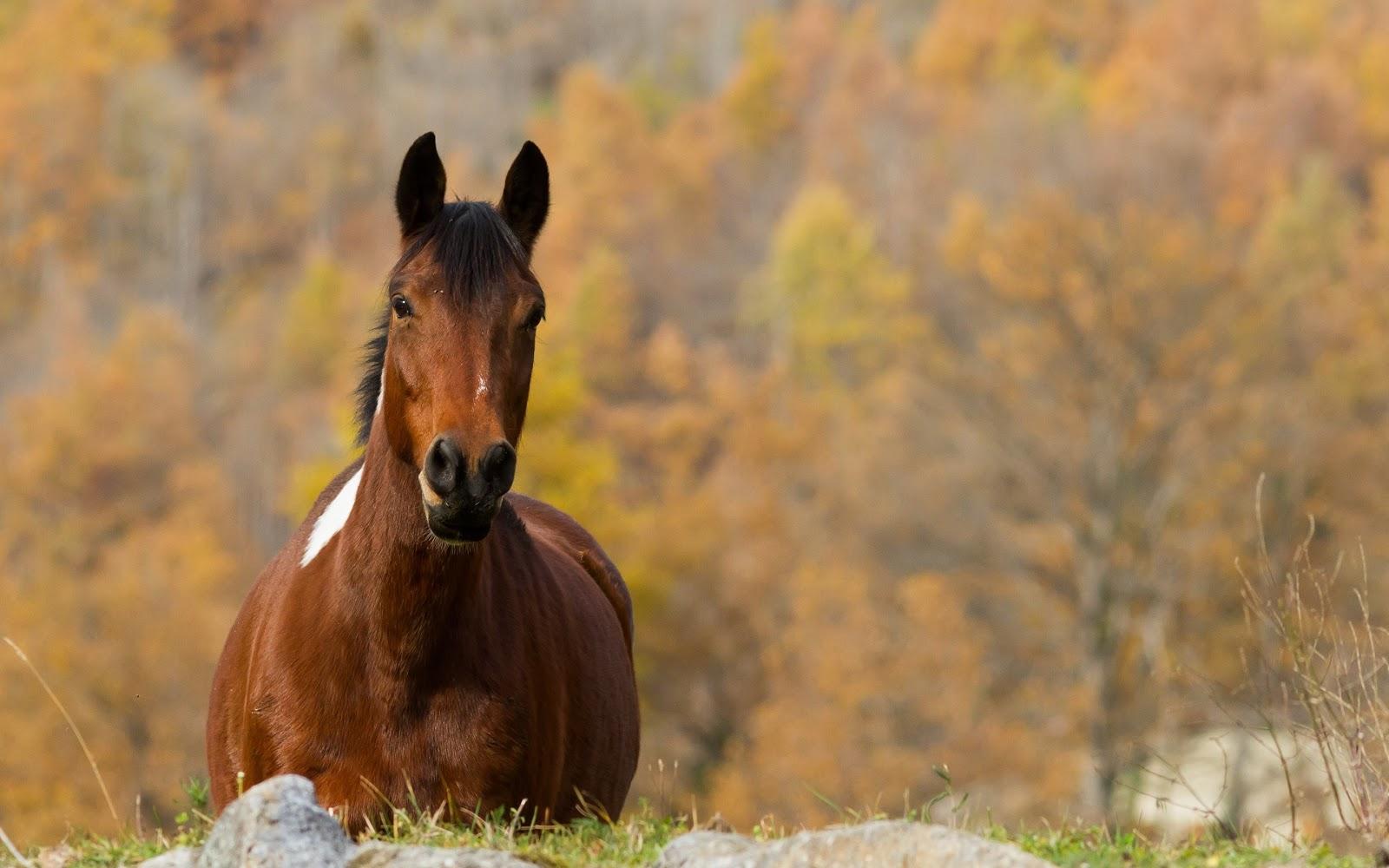 6 факторов защиты иммунитета лошади осенью