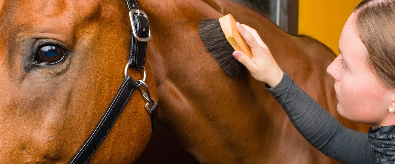 Полный список снаряжения для лошади