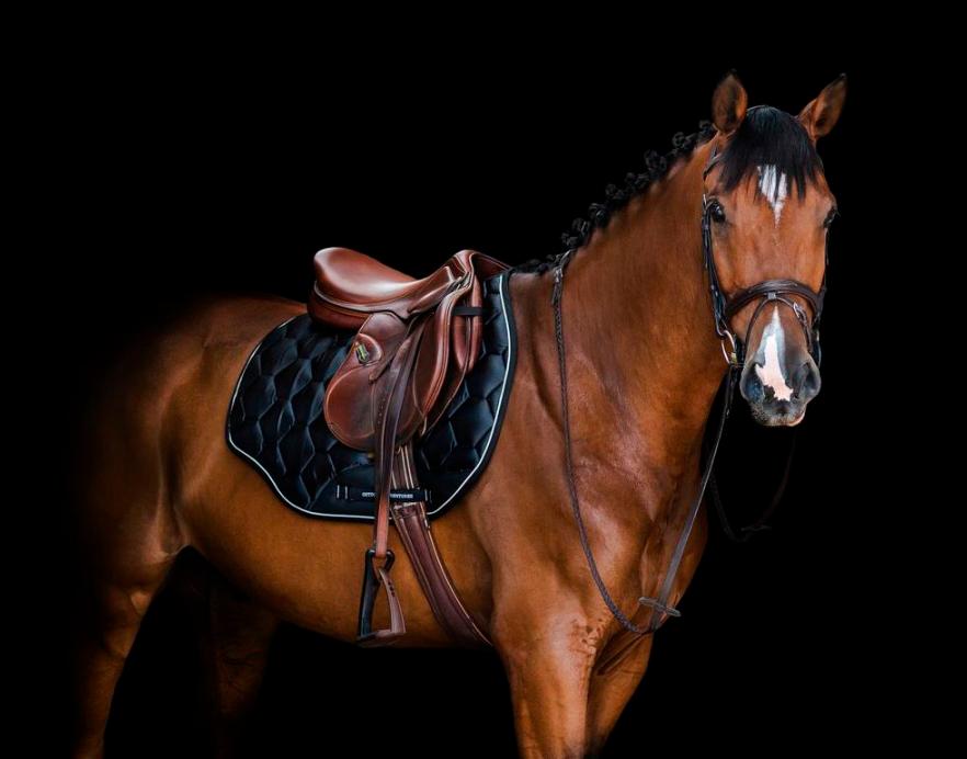 Потники для лошади
