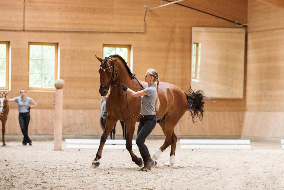 Советы для начинающего конника любителя