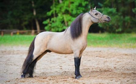 Всё, что нужно знать о пони: содержание, породы, мифы