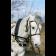 Упряжь русская купить в интернет магазине конной амуниции 11595